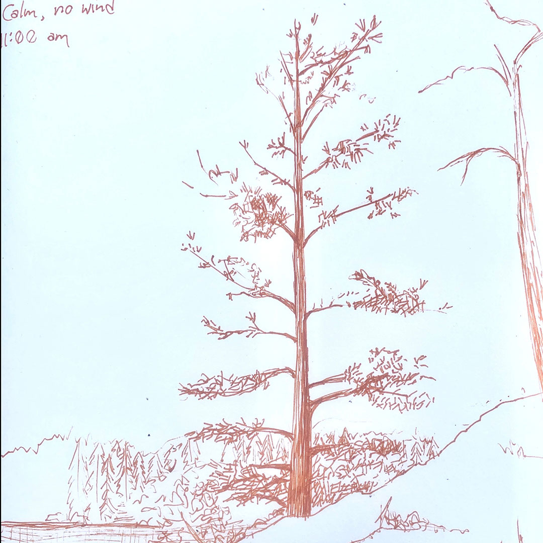 Sketch of Tree by Shantell Powell